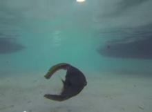 น่าสงสารจังเลย ปลาโดนหั่นเหลือแต่หัวแต่ยังว่ายน้ำได้!!