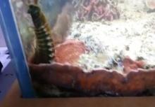 อึ๊งไปดิ!!เจอหนอนไฟยาวเป็นเมตรซ่อนในตู้ปลา อยู่มานานกว่า 2 ปี