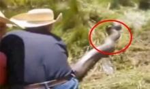 ตะลึง ! ชาวบ้านพบงูขนาดใหญ่ ช้วยกันจับลากขึ้นจากป่า Giant snake.