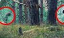 5 เรื่องแปลกลึกลับที่พบเจอในป่า