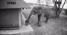 เหลือเชื่อ! ช้างแสนดี เก็บขยะทิ้งลงถัง!