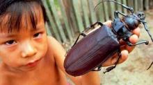 แมลง 10ชนิด ที่จะต้องทำให้คุณทึ่งกับมัน
